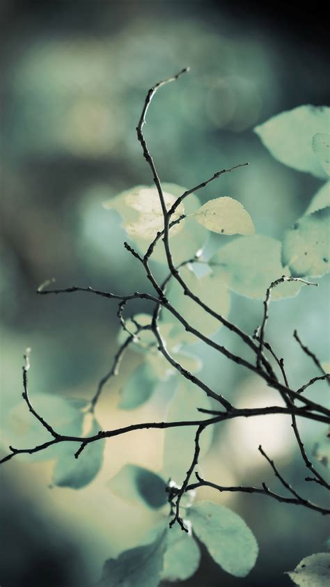 twigs green leaves iphone  gs wallpaper