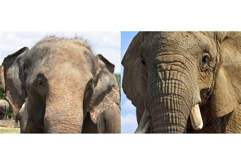 cuisine d entreprise eléphants éléphants d 39 afrique éléphant d 39 asie pratique fr