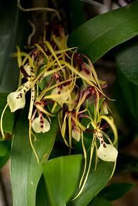 Entretien D Une Orchidee. plante entretien d 39 une orchid e astuce ...