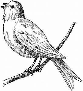 Bird | ClipArt ETC