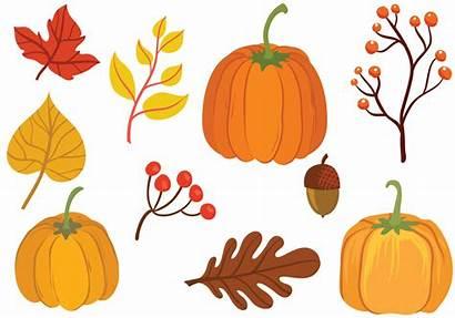 Pumpkin Vector Vectors Patch Thanksgiving Svg Clip