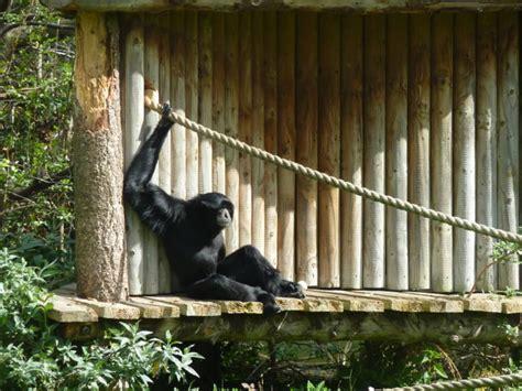 animals zoos zoo kept should animal ks2 against kqed macentee sean wild
