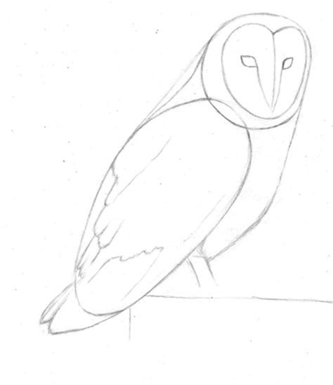 owl outline drawing how to draw a barn owl pencil sessions