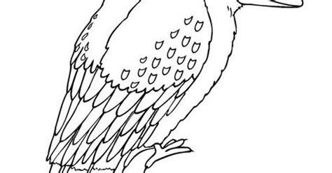 kookaburra colouring page kookaburro pinterest