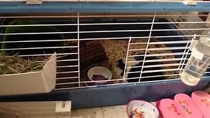 Cage A Cochon D Inde : comment bien choisir la cage de son cochon d 39 inde et o la ~ Dallasstarsshop.com Idées de Décoration
