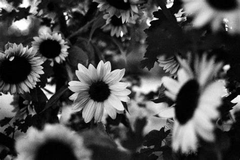 black  white tumblr backgrounds google search