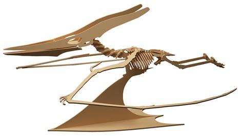 Pterodactyl (anatomically Correct)