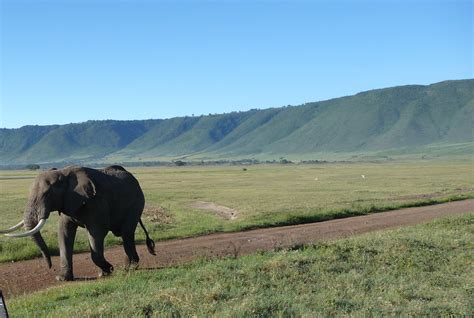 Ngorongoro Crater  Aj Tours And Safaris