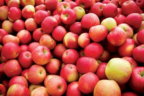 Johnny Appleseed Day! | Vibrant Health Family Clinics