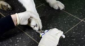 beruhigungstabletten für den hund