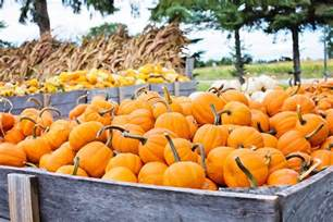 Colorado Springs Pumpkin Patch Black Forest by Explore Pikes Peak And More For Your Family In Colorado