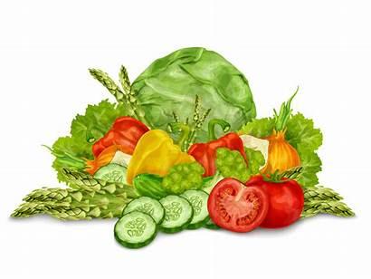 Vegetables Vector Vegetable Mix Illustration Still Clip