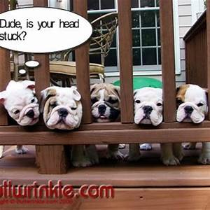 funny bulldogs | Cuteness | Pinterest | Pictures, I love ...