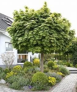 Die Schönsten Gartenbäume : 31 besten gartenb ume bilder auf pinterest ~ Michelbontemps.com Haus und Dekorationen