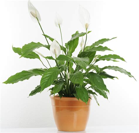 keep your indoor plants and healthy