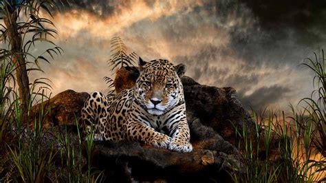 coolest jaguar cat big cats animals wallpaper 34365415 fanpop
