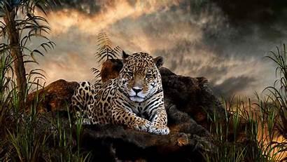Animals Cats Wild Animal Fanpop Desktop Wallpapers