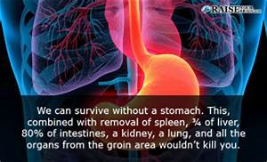 12 Interesting stomach facts: Human body facts ...