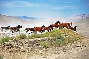 Kids too close to wild horses | TUESDAY'S HORSE