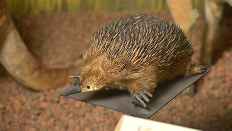 Pasaules dzīvnieki | Latvijas Nacionālais dabas muzejs