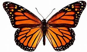 Nature Canada  U2013 Monarch Playgrounds U2014create A Butterfly Garden