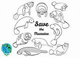 Coloring Manatee Pages Animal Florida Imagine sketch template