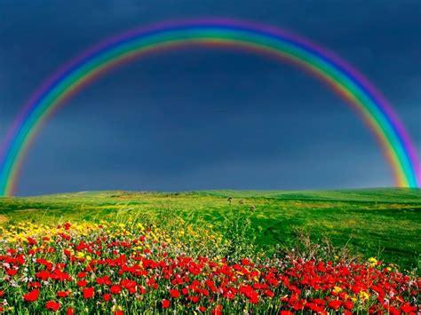 rainbow wallpaper  rainbow   life