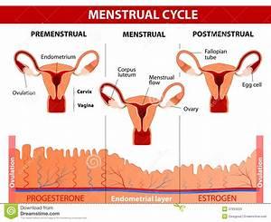 Menstrual Cartoons  Illustrations  U0026 Vector Stock Images