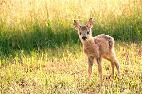 Plants And Animals Feel The Heat Of Europe′s Warm Winter
