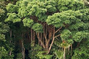 The Plant Most Fundamental to Life on Earth