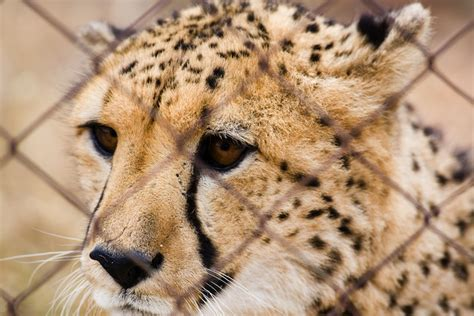 New Petition Calls For End To Animal Cruelty In Saudi Arabia  Green Prophet