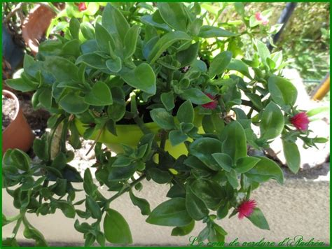 les plantes page 3