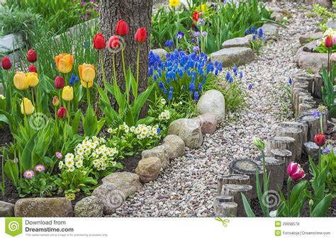 tulip flower garden free stock tulip flower floral spring plants nature royalty free stock photos image 29998578