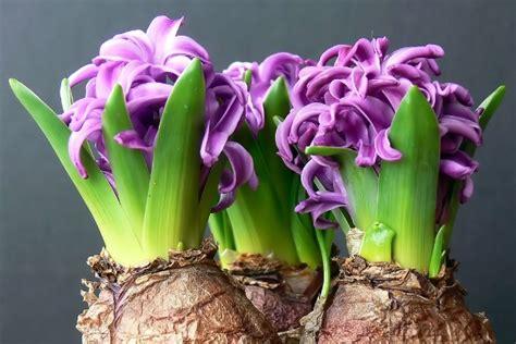 underground storage focus on flowers indiana media