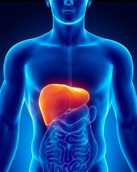 Know : Top 10 Largest Organs of the Human Body – PROPEL STEPS