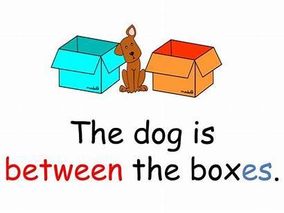 Between Dog Boxes Box Presentation Lieu Les