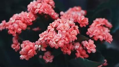Flowers Flower Pink 4k Wild Bloom Bush