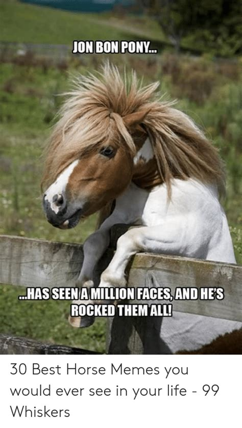 birthday happy horse meme memes pony whiskers ever would
