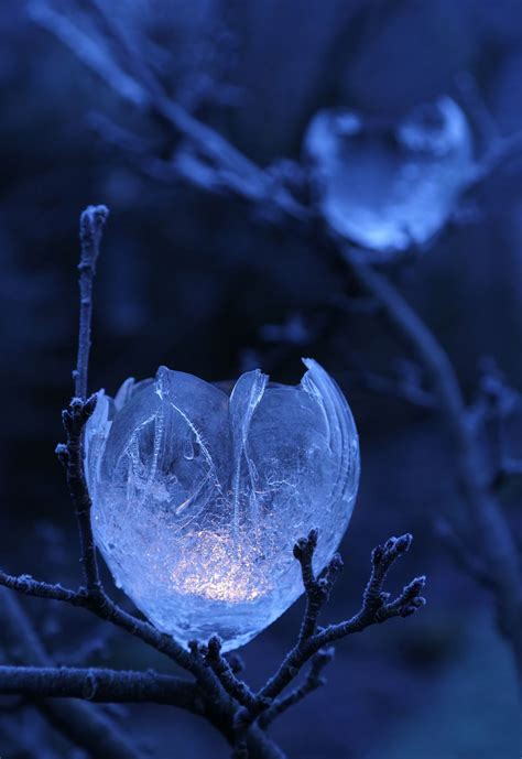 apple tree lights blue aesthetic blue flower