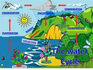 The Water Cycle By  U0026quot Taplor U0026quot