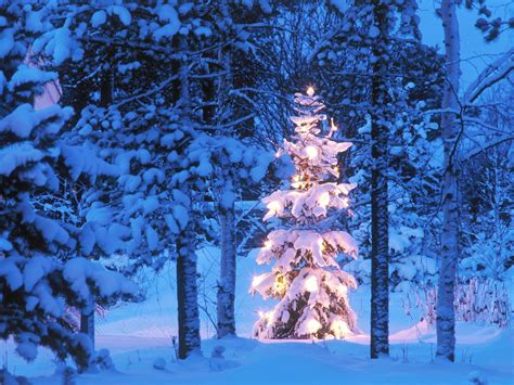 winter christmas tree wallpaper background 24628