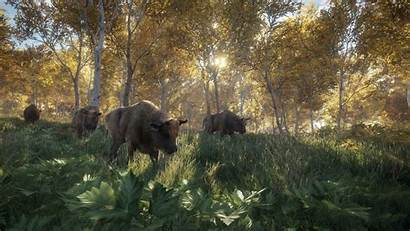 Wild Call Thehunter Pc Ps4 Xbox Bison