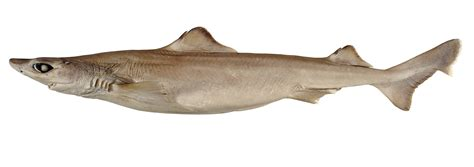 environment eat weird delicious fish