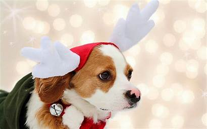 Christmas Dog Dogs Wallpapers Iphone