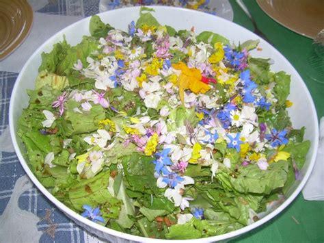 fiori di borragine ricette involtini di romice e borragine vegan ricette