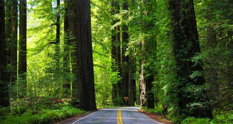 Camping Jedediah Smith Redwoods State Park In California