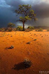 Vertical Landscape Photography