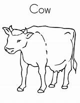 Cow Coloring Printable Outline Tracing Twistynoodle Library Clipart sketch template