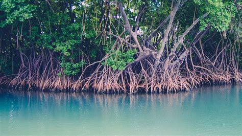 Mangrove Warning 24052016, Behind The News