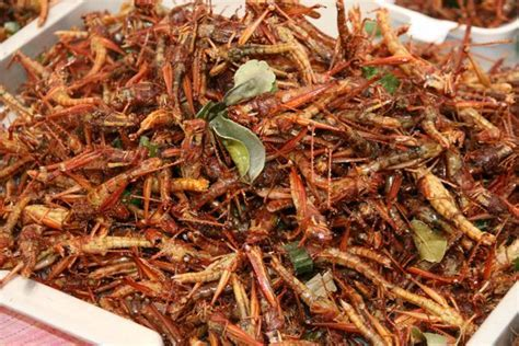 thai insects 2